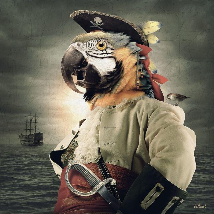 Captain Coco