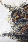 Superposition - Leopard
