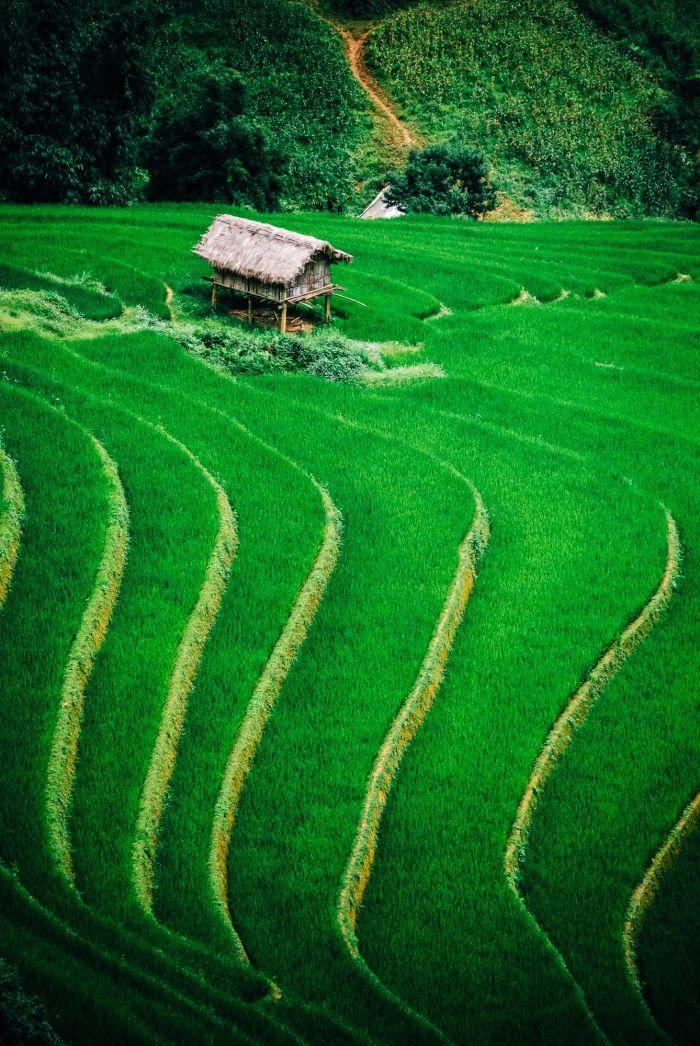 Rizieres du Vietnam